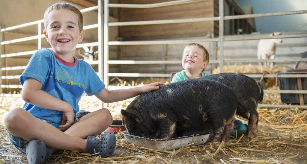 Owen and Aidan with pigs